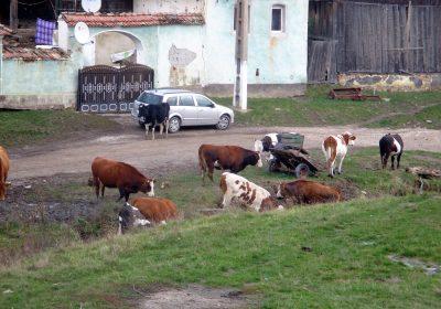 rumaenien-radeln2